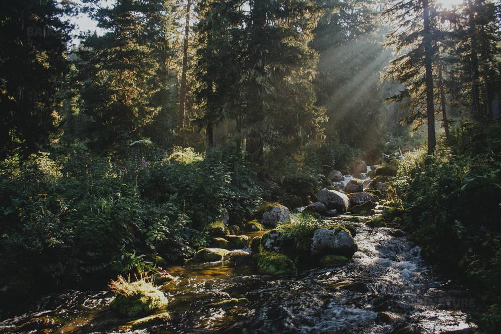 Солнечные лучи льются сквозь деревья в туманном лесу с ручьем. Природный Парк Ергаки, Сибирь