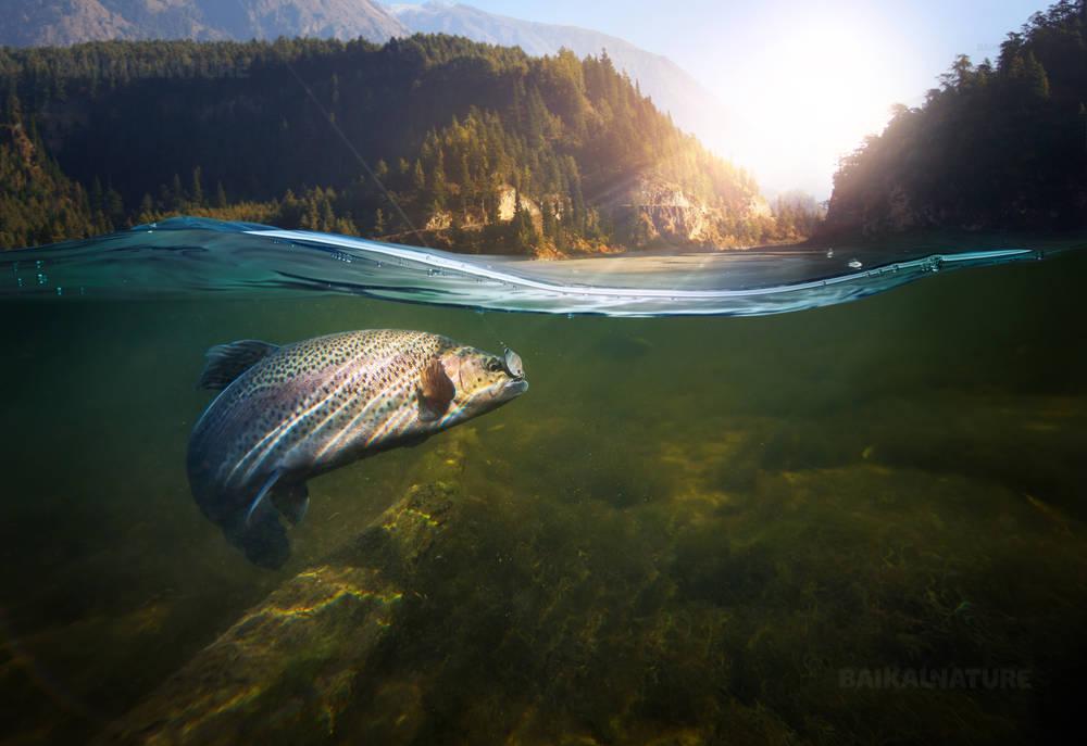 Рыбалка. Рыболовный крючок под водой.