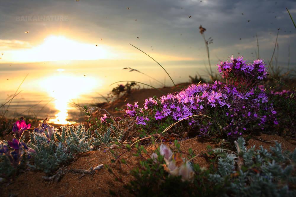 Закат в урочище Песчаное