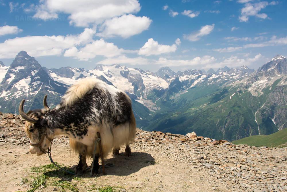 Кавказские горы Домбай, як.