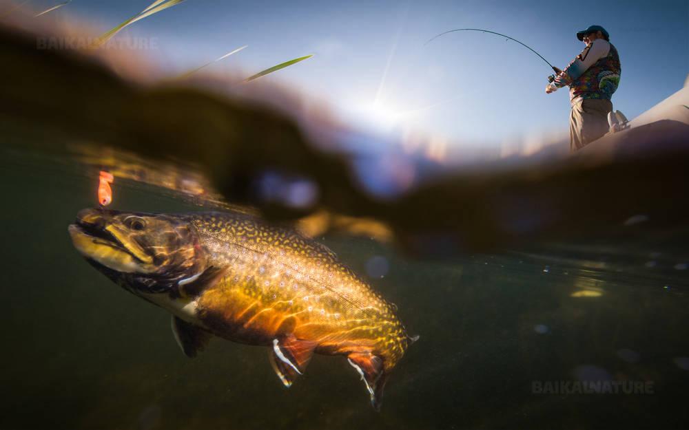 Рыбак и форель, подводный вид